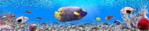 Подводный мир 116