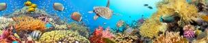 Подводный мир 118