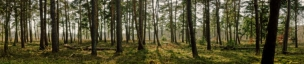 Леса 104