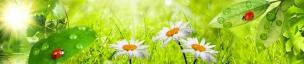 Растения,цветы 011