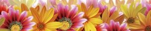 Растения,цветы 012