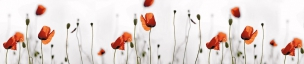 Растения,цветы 006