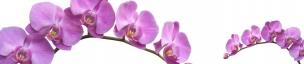 Растения,цветы 008
