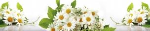 Растения,цветы 009